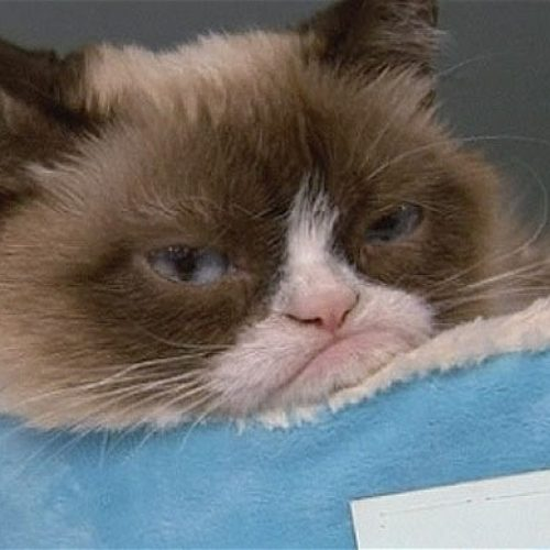 Grumpy Cat Has Made Her Owner Almost $100 Million In Just Two Years